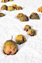 Pears falling in the snow Stock Photo