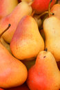 Pears pear is any of several tree and shrub species of genus pyrus in the family rosaceae Royalty Free Stock Photo