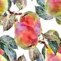 Pears watercolor handmade white background Royalty Free Stock Image