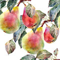 Pears watercolor seamless pattern handmade white background Stock Images