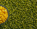 Peas corn background of and laid by hand remove debris canned and real Stock Photography