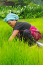 Peasant female in northern Thailand Royalty Free Stock Images