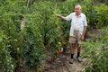 Peasant in garden old standing beside tomato plant Stock Photos