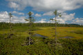 Peat bog in krkonose mountain czech republic Stock Photo