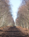 Peat path through trees Royalty Free Stock Images
