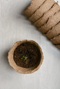 Peat pot with seedlings Royalty Free Stock Photo