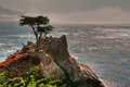 Pebble Beach Lone Tree Royaltyfri Fotografi