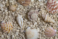 Pebble beach with shells background Royalty Free Stock Images