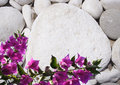 Pebble and flower white bougainvillea background for your text Royalty Free Stock Photos