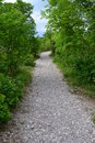 Pebbly forest path curving through lush green vegetation in the springtime Royalty Free Stock Image