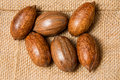 Pecan nut laying on canvas back Royalty Free Stock Photos