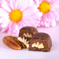 Pecan Nut Truffle Stock Photo