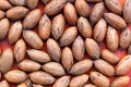 Pecan nuts on red a collection of regular unshelled a background Stock Photography