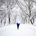 Pedestrian in Central Park, New York in winter Royalty Free Stock Photo