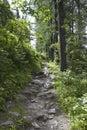 Pedestrian Path Through Nature