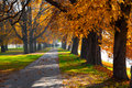 Pedestrian walkway and autumn trees for exercise lined up with beautiful tall Royalty Free Stock Photos