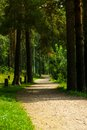 Pedestrian walkway for exercise lined up with beautiful tall trees Royalty Free Stock Photo