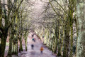 Pedestrians in a tree-lined avenue in winter Royalty Free Stock Photo