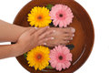 Pedicure manicure spa gerbera daisies Stock Photography