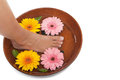 Pedicure spa gerbera daisies Stock Images