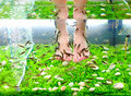 Pedicure spa treatment rufa garra fish Stock Photos