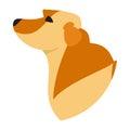 Pedigree dog head labrador retriever