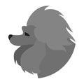 Pedigree dog head poodle