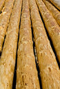 Peeled logs background Stock Images