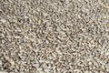 Peeled sunflower seeds as background. Royalty Free Stock Photo
