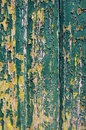 Peeling green paint background of old wooden door with yellow and Stock Photos