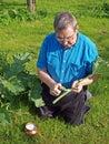 Peeling rhubarb senior man in garden stalk Royalty Free Stock Photo