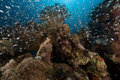 Peixes e coral de vidro no mar vermelho Imagens de Stock Royalty Free