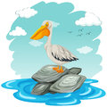 Pelican bird standing on rocks Royalty Free Stock Photo