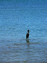 Pelican kingfisher in panama a the ocean waters of bocas del toro archipelago isla colón Royalty Free Stock Photo