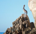 Pelican perched on Los Arcos rocks on Lands End at Cabo San Lucas Baja Mexico Royalty Free Stock Photo