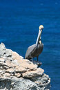 Pelican perching on cliff of acantilado amanecer ciff of the dawn at punta sur on isla mujeres island just off cancun coast from Royalty Free Stock Photo