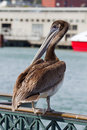 Pelican by the Pier in San Francisco Bay Stock Images