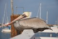 A pelican rests along a fence on a pier. Royalty Free Stock Images