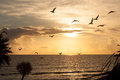 Pelican silhouettes pelicans in the early morning over daytona beach Royalty Free Stock Photo