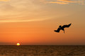 Pelican and Sunset Stock Photos