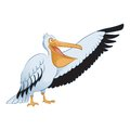 Pelican vector image of an cartoon showing Royalty Free Stock Image