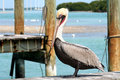 Pelican on wooden dock Stock Photo