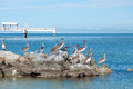 Pelicans and fishing dock sitting on top of rocks at fort desoto park in florida with in the background Royalty Free Stock Photo