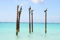 Pelicans resting on wooden poles, Aruba, Caribbean Royalty Free Stock Photo