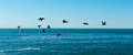 Pelicans santa cruz group of brown flying over the pacific ocean near california Stock Photos