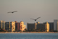 Pelicans at sunset flying to the city Stock Image