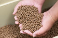 Pellet fsh feed Royalty Free Stock Photo