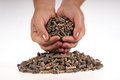 Pellets- biomass Royalty Free Stock Photography