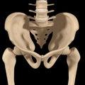 Pelvic hip