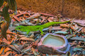 Pemba island day gecko parker s phelsuma parkeri is a diurnal species of geckos Stock Photo